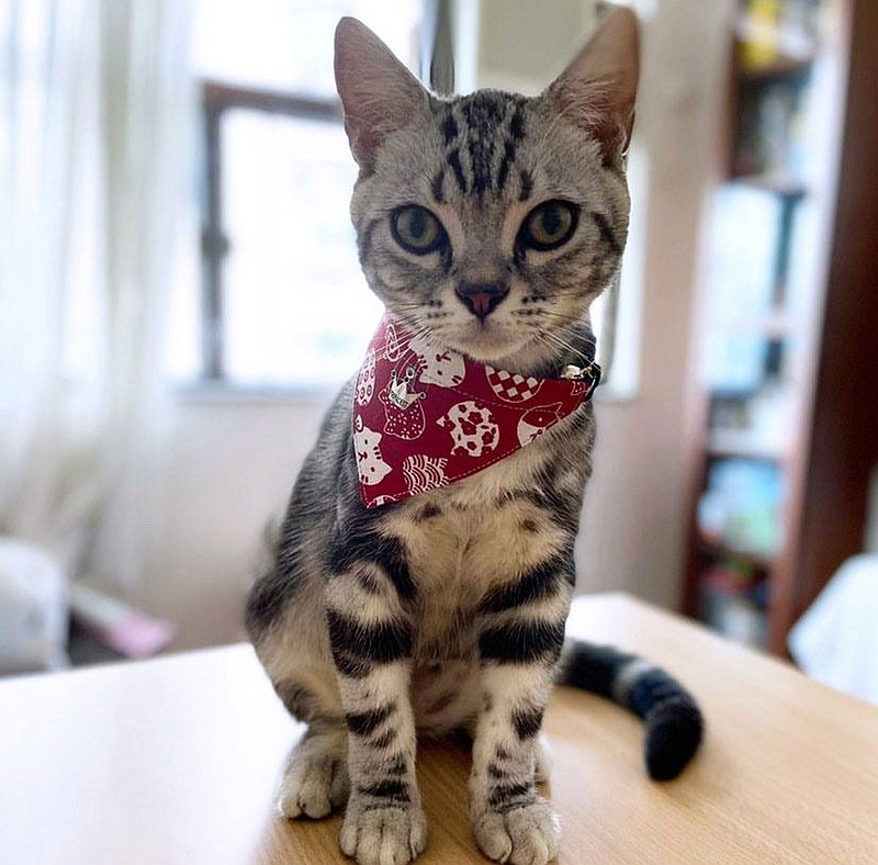 *Cat*Figure Triangle Collar Collar Cat Dog Neck Strap S size