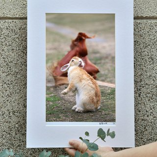Limited Rabbit Photo Art Original - Bide