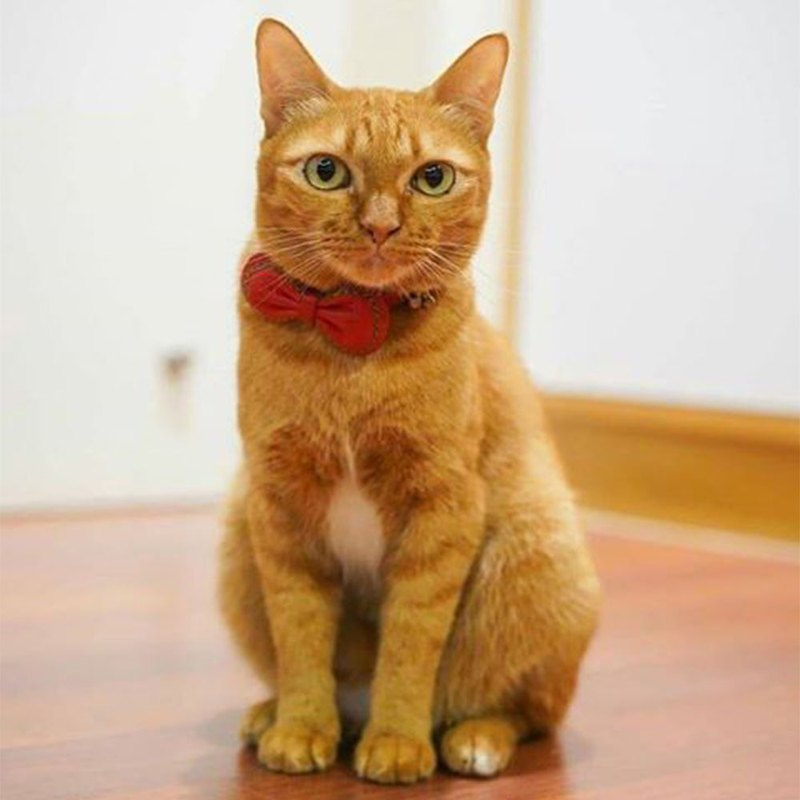 Leather Collar red two-tone  in S size cat or small dog (neck 20-22cms)