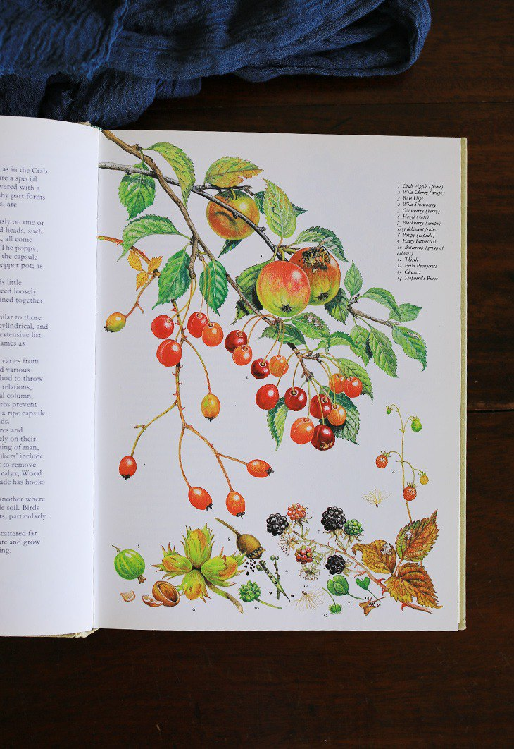 [Latest spot] 1980s Britain [flowers and fruits] retro old book illustration antique book