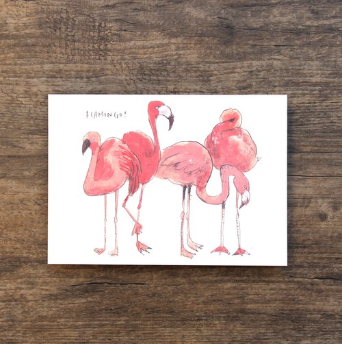 Postcard Flamingo Birds