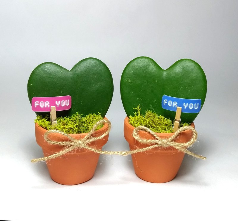 Mini heart-shaped potted single pot Valentine's Day / love gift plant / office decoration
