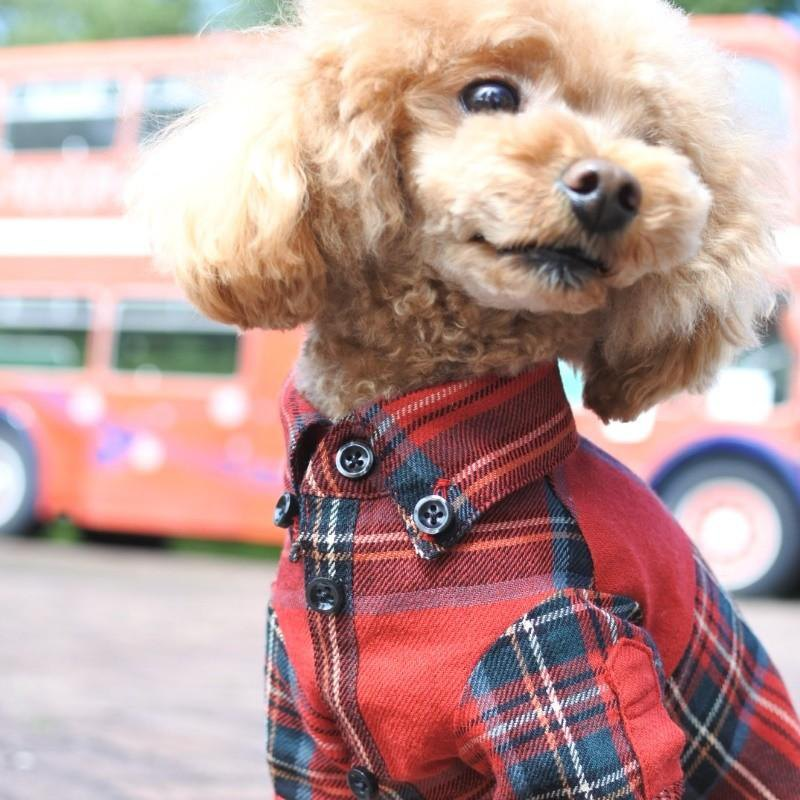 Fashionable dog clothes VIERA check shirt Red S size