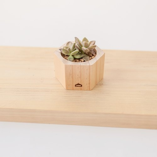 [Wood beehive S-4cm high] hand-carnivorous wood flower / without planting admission