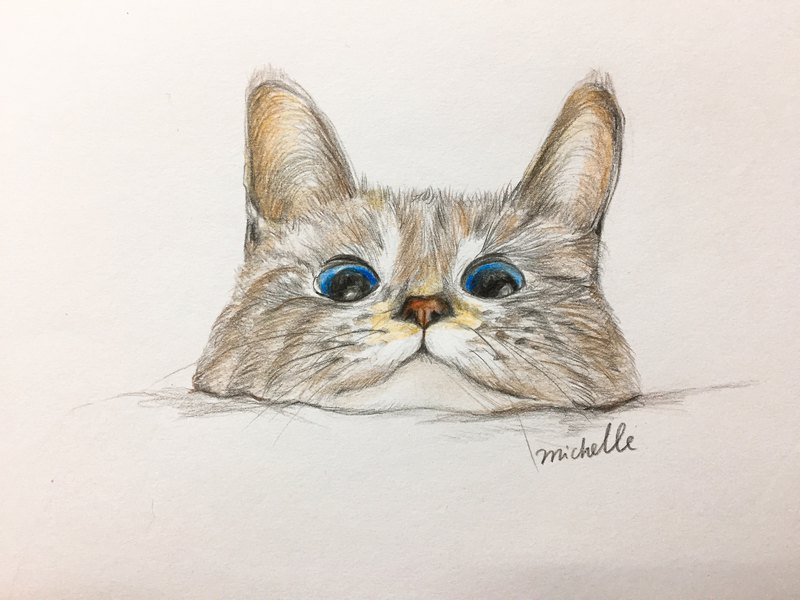 Color pencil painting hand made course-pet illustration