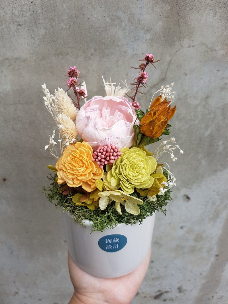 Haizang Design │ Secret Garden. Colorful micro-potted flower / opening pot flower