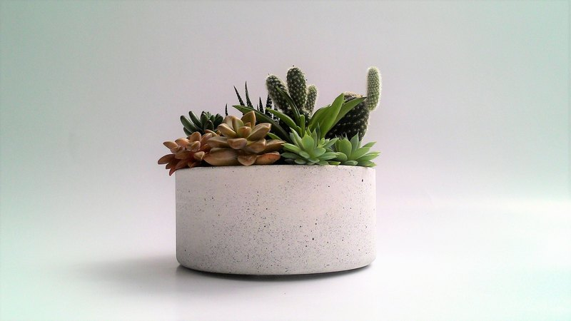 [Shallow round pot] cement flower / cement pot / cement planting (without plants)
